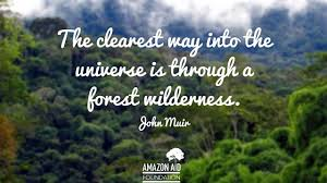 Quotes About Landscape by 9 Inspiring Quotes About Forests Amazon Aid Foundation