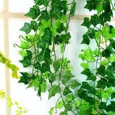 indoor vine plant indoor vine plants image indoor vine plants for sale
