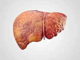 liver function what does the liver do