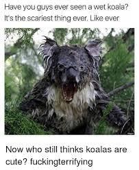 Angry Koala Meme - 25 best memes about wet koalas wet koalas memes