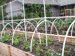 White Pvc Trellis Growing Melons Vertically On A Trellis The Square Foot Gardening