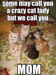 Crazy Cat Memes - some may call you a crazy cat lady but we call you mom cat meme