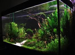 Aquascape Freshwater Aquarium Freshwater Aquarium Design Ideas 30 Best Aquarium Decor Using