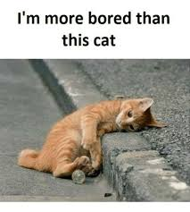 Bored Meme - i m more bored than this cat bored meme on me me