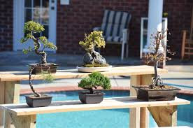 tpt bonsai thread show off your collection page 32 the