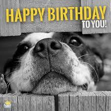 Cute Birthday Meme - funny animal meme happy birthday