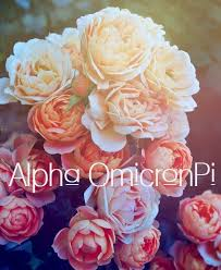 rose theme alpha 3 620 best aoii or die images on pinterest alpha omicron pi