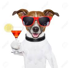 martini glass cheers funny cocktail dog holding a martini glass stock photo picture