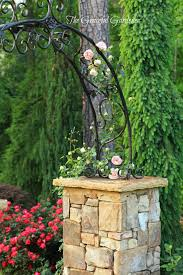 Patio Tree Rose by The Graceful Gardener Don Juan Climbing Rose