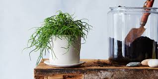 how to bring a dying house plant back from the brink huffpost