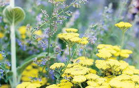 10 Best Perennials And Flowers by Plant Awesome Perennial Flowers Full Sun 10 Low Maintenance