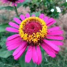 Landscape Flower Garden by Free Images Landscape Tree Nature Path Blossom Fence Plant
