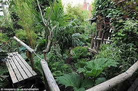 man creates exotic paradise garden banana plants palm