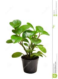 ornamental plants stock photo image 60806134