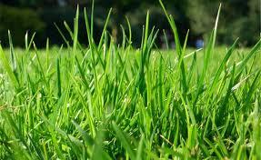 16800 density paper grass mat dividing ornamental grasses in