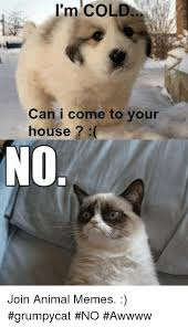 Grumpy Cat No Meme - i m cold can i come to your house no join animal memes grumpycat