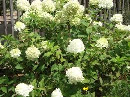 wildtype native plant nursery plants newsletters