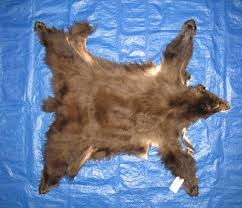 How Much Does A Bear Rug Cost Tanned Complete Black Bear Hides Furs Pelts Skins For Sale By