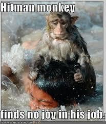 Funny Monkey Memes - hitman monkey know your meme