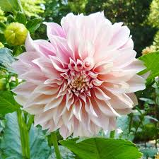 most popular flowers 100 most popular annual flowers gardening classes and