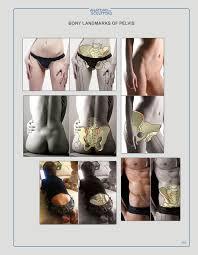 Human Anatomy Textbook Pdf Anatomy Next Store Pdf Ebook Download For Artists Torso