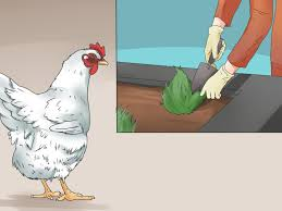 how to keep birds away from patio how to repel chickens 11 steps with pictures wikihow