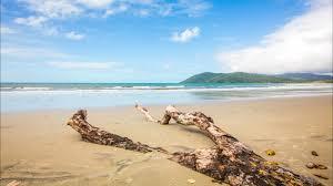 The Beach House Cape Tribulation by Cow Bay Queensland Australia U0027s Guide
