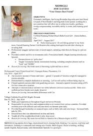 Best Resume Highlights by Owner Creates Adorable Resume To Help Foster Dog Find A Home