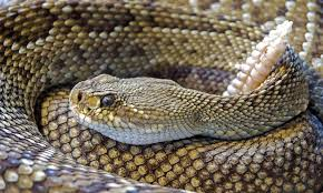 Snake Holes In Backyard How To Rattlesnake Proof Your House And Yard To Keep Them Away