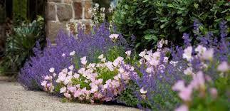 hardys cottage garden plants top 10 plants for a modern cottage