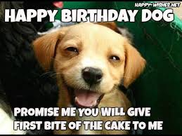 Birthday Dog Meme - happy birthday wishes for dog quotes images memes happy wishes