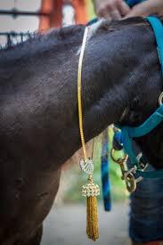 a winning combination mini horses and stephanie lake design