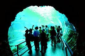 aquarium bureau travel itinerary accommodation national museum of marine biology