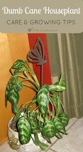 Low Light House Plant 193 Best Growing Tropical Plants Images On Pinterest Indoor