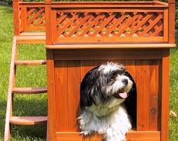 Bunk Bed For Dogs Finally U2026 Bunk Beds For Dogs U2013 Blue Cow