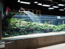 Japanese Aquascape by 152 Best Aqa Images On Pinterest Aquarium Ideas Aquascaping And