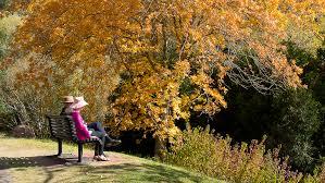 Mt Lofty Botanic Gardens A On A Seat Enjoy The Views At The Mount Lofty Botanic