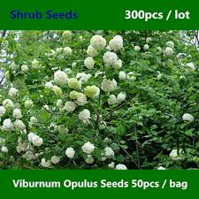 compare prices on trees and ornamental shrubs shopping buy