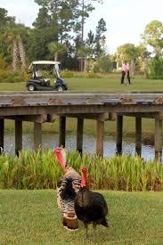 things to do in orlando thanksgiving weekend thanksgiving bonnet creek blog