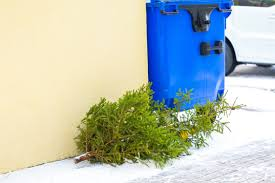 done with your christmas tree here u0027s how to pitch it wtop