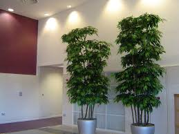 fake trees for home decor decorative fake trees for the home room design plan fantastical in