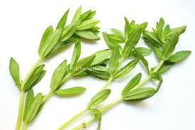 herbe cuisine herbe à paddy photo la kitchenette de miss tam recettes