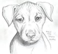 drawn puppy doggy pencil and in color drawn puppy doggy