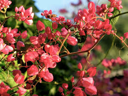 Water Challenge Vine Plant Of The Month Wreath Water Use It Wisely