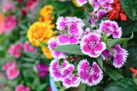 fleurs vivaces rustiques jolis arbustes et plantes qui ne craignent pas le gel