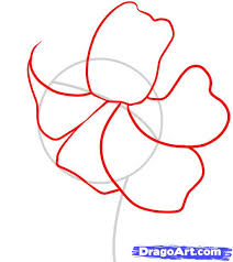 how to draw a tiger lily step 2 personal pinterest tiger
