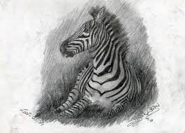 zebra drawing by helviriitta on deviantart