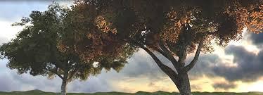 marlin studios treefarm photorealistic 3d tree models free