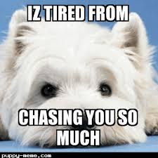 Tired Dog Meme - doggy