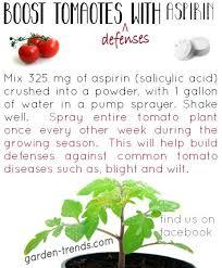 Tomato Plant Wilt Disease - 26 best tomato diseases images on pinterest tomato diseases